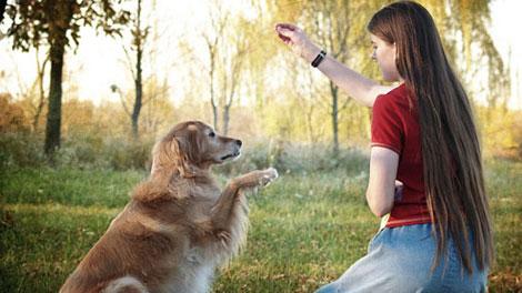 Bermain dengan Binatang - www.adrianoize.com