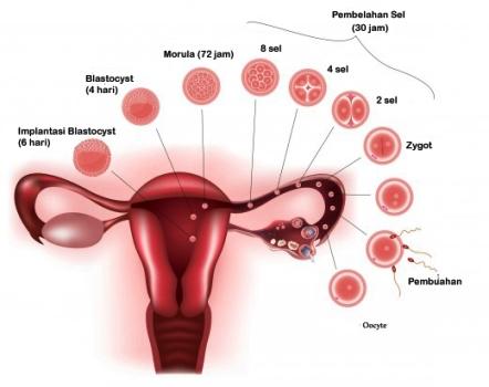Tanda dan Gejala Kehamilan Minggu Pertama