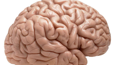 Otak Manusia - www.iran-daily.com
