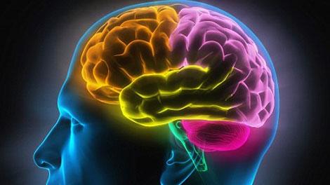 Otak Manusia - dagelan.co