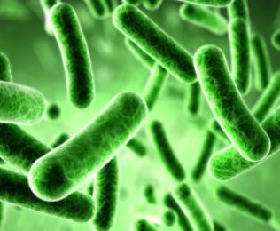Berbagai Penyakit Akibat Bakteri
