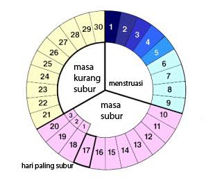 Kesehatan Wanita : Siklus Reproduksi Normal Wanita
