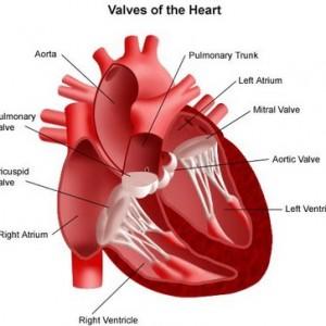 Mengenali Jenis dan Gejala Penyakit Jantung