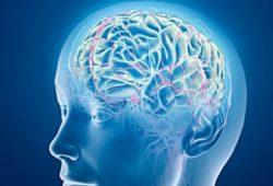 'Melepaskan' Kebiasaan dari Sirkuit Otak