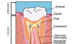 bagiangusi-gigi