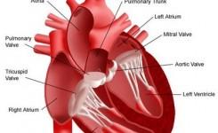 katup-jantung