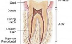 Bagian dan lapisan gigi
