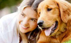 Bakteri-Anjing-Sebarkan-Flu