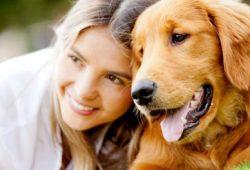 Awas, Bakteri Anjing Sebarkan Flu dan Bahayakan Wanita Hamil
