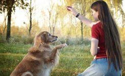 bermain-dengan-binatang