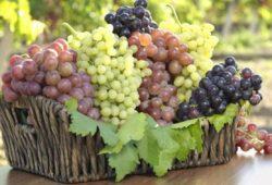 Buah Beri & Anggur Baik untuk Kesehatan Paru-Paru