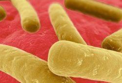 Waspada, Kasus Infeksi Usus Clostridium difficile Meningkat Tajam