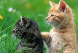 Manfaat Kesehatan dan Risiko Memelihara Binatang
