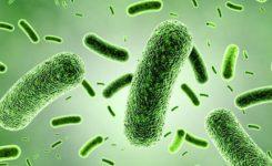 Manfaat-Probiotik