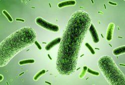 Studi: Manfaat Probiotik Tidak Sama untuk Semua Orang