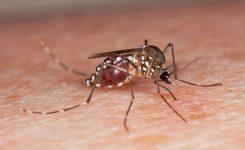 Menghindari-Gigitan-Nyamuk