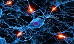 Myelocortical Multiple Sclerosis, Subtipe Baru dari Multiple Sclerosis