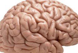 Otak, Tempat Memulai Pengobatan untuk Kecanduan