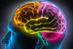 Hubungan Otak Kanan dan Otak Kiri dengan Kepribadian
