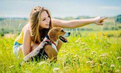 Pelihara Anjing Kurangi Risiko Gangguan Stroke & Jantung?