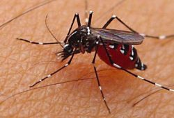 Nyamuk Makin Kebal, Butuh Teknologi Baru Cegah Penyebaran Penyakit