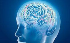 Sirkuit-Otak
