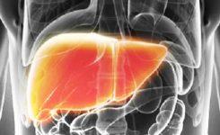 hati-liver-lever