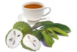 Berbagai Manfaat Terapi Daun Sirsak untuk Kesehatan