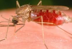 Kini, Penyakit Malaria Bisa Dideteksi Lewat Secarik Kertas