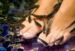 Manfaat Terapi Ikan untuk Kesehatan