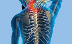 tulangbelakang-punggung